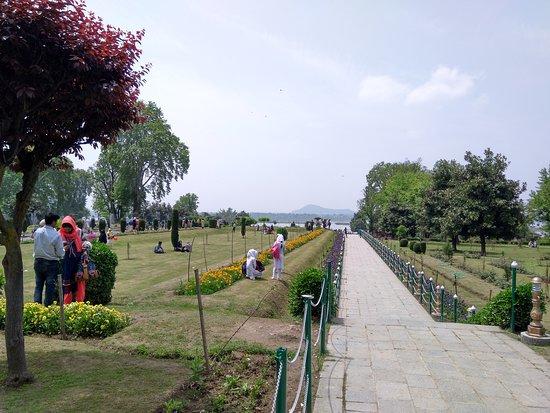 Kashmir Tulip Festival: Nishat Garden