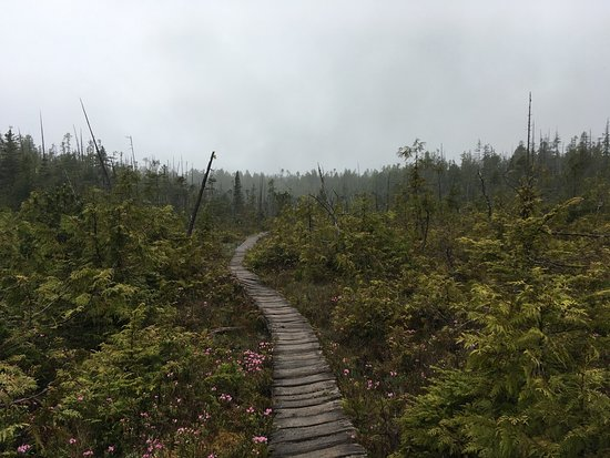 One of my favorite sections of the West Coast Trail on Vancouver Island. The early morning mist and spring flowers make it look magical.