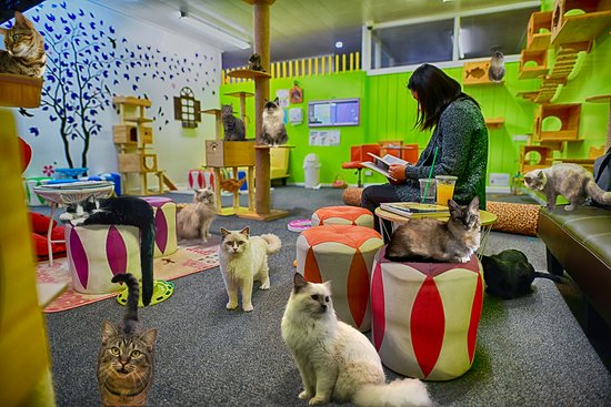 Fancy Meow Cat Cafe