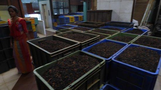 Embilmeegame, Sri Lanka: The guide at the tea factory.