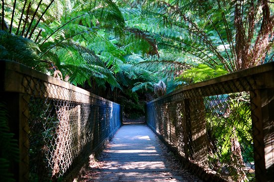 BIG4 St Helens Holiday Park: St Columba Falls