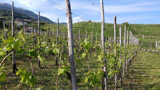 Marsuret Azienda Agricola