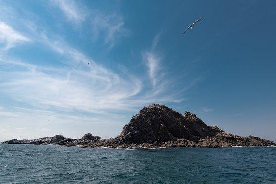 Otaru, Japon: トド岩の向こうに広がる青い空。あ~あの鳥のように空を飛べたら・・・。