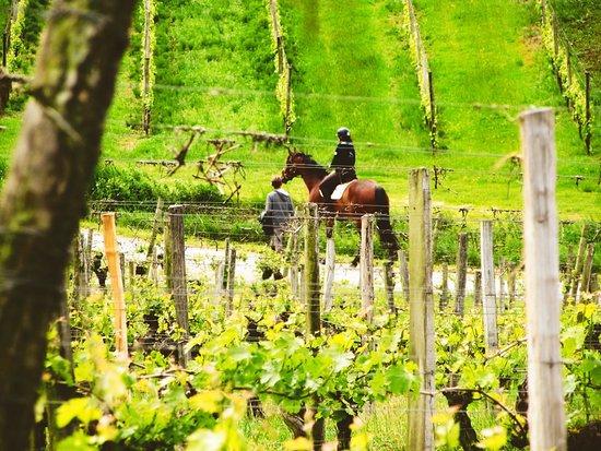 Eynesse, France : L'activité équestre au coeur du vignoble vous permet de vivre votre passion dans un décors unique. Tout est au rendez-vous : écuries, carrières, paddocks, coach, palefrenier... il ne manque plus que vous!