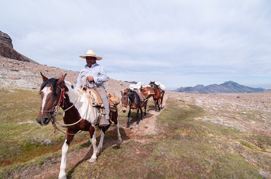5-Day Trekking Expedition: Cóndor Circuit: Don Miguel and the horses