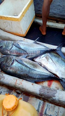 Kalametiya Deep Sea Fishing