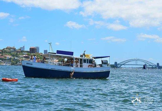 Classic Boat Cruises