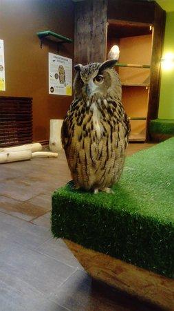 eagle-owl on underground floor