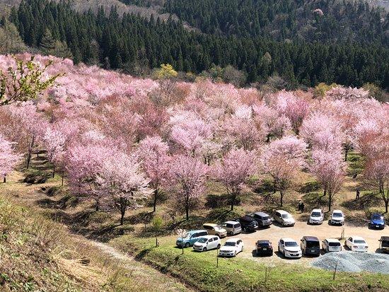 Sakura Pass