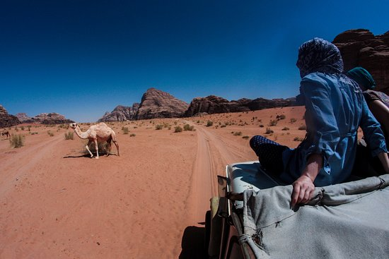 On our jeep tours to discover the desert life