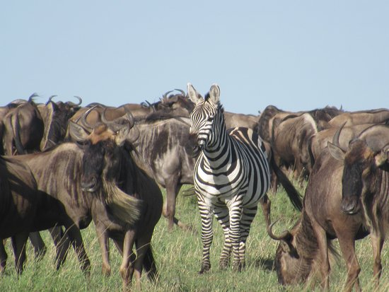 3Days Serengeti Safari: mélange insolite !!!