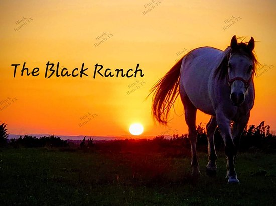 The Black Ranch