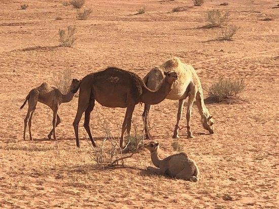 Wadi Rum Desert Eyes (Wadi Rum Village) - Updated 2019 - All