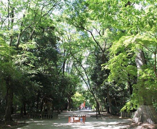 Tadasu No Mori Grove