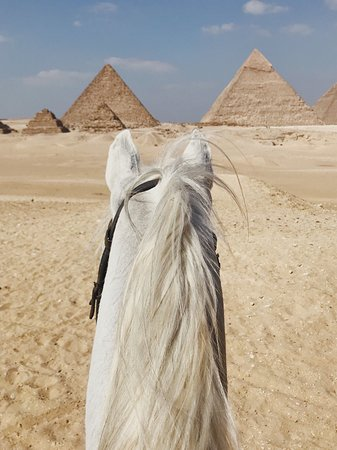 Horse riding in Cairo, Luxor and hurgahga.