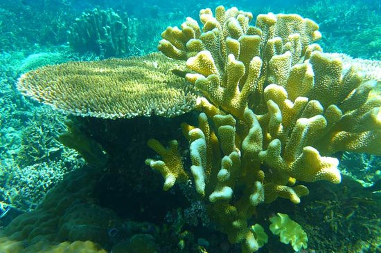 Togian Islands, Indonesië: Underwater World at Reef No.5