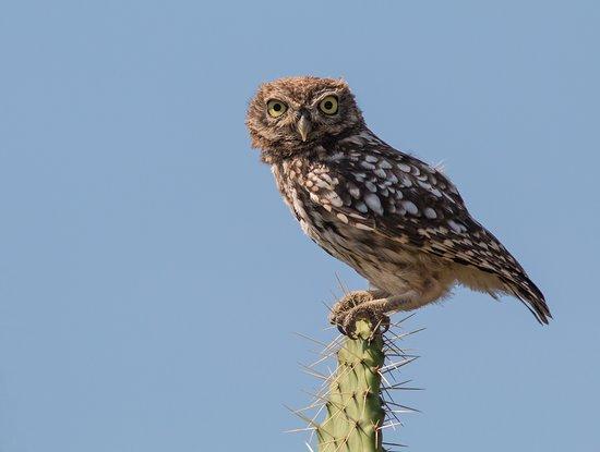 Birding Tarifa