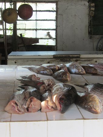 Montevideo Department, Uruguay: daily catch from local fisherman