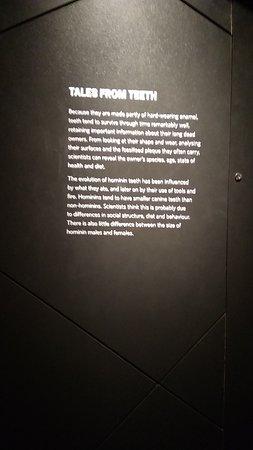 Human evolution exhibition