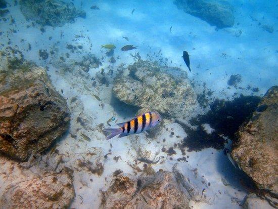 The Arusun - Aruba Catamaran Sail with Snorkeling: Lots of pretty fish!