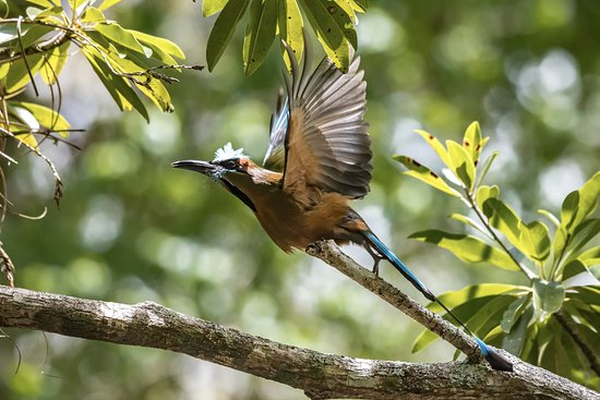 The Mayan Experience: Chichen Itza, Ek Balam and Valladolid (PRIVATE TOUR): Motmot in Flight