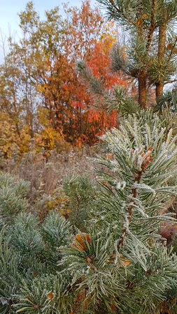 Lapland Sweden, Sweden: The frost helps bring out the lovely reds, oranges and yellows of Autumn.