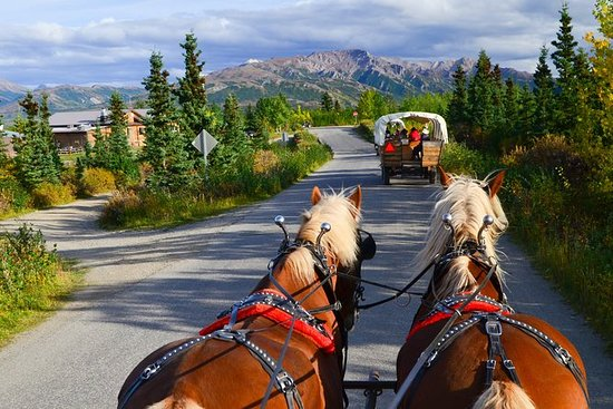 Horse-Drawn Covered Wagon Ride med...