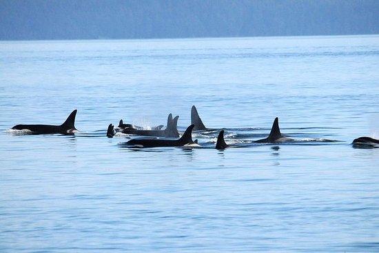 Avistamiento de ballenas de Vancouver...