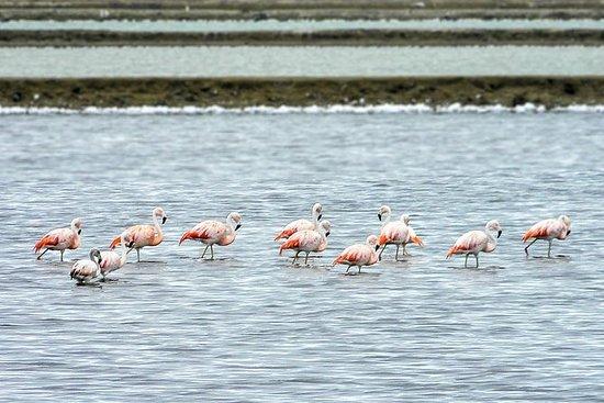 Salinas旅游和鸟类路线全天从瓜亚基尔出发