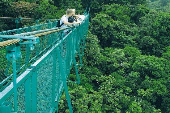 モンテベルデ雲の森へのプライベート全日ツアー
