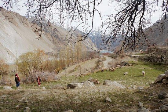 Hình được chụp vào buổi chiều an yên dạo quanh làng Ghulkin, Hunza. Khi chúng tôi đang ngồi nghỉ dưới một tán cây lớn thì tình cờ gặp hai mẹ con dẫn các bé cừu đi ăn cỏ và quả mơ khô.