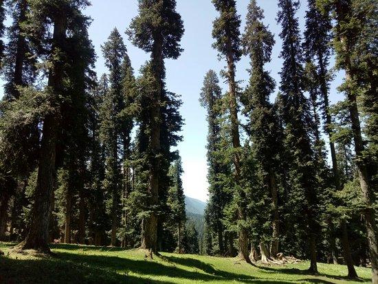Wildfun Adventure Treks & Tours