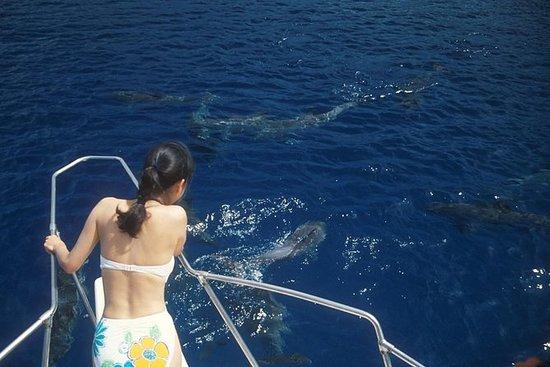 Observación de delfines, snorkeling...