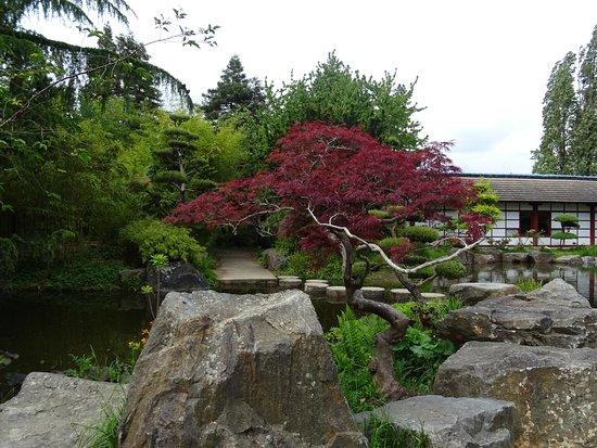 Petite Cascade Jardin Japonais Ile De Versailles Picture Of