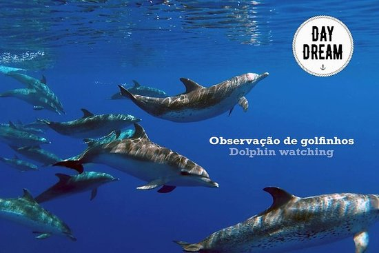 Dolphin watching in Sesimbra