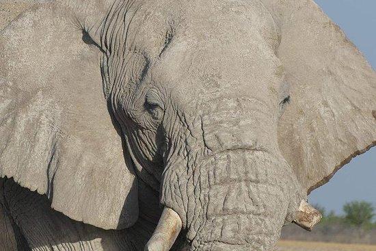 5 días destacados de Namibia