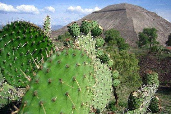 Messico: tour privato a Teotihuacan