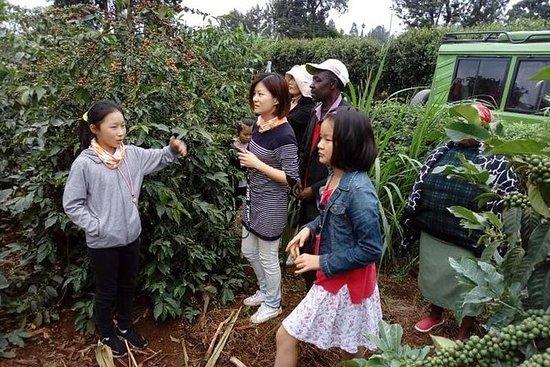 Kiambu Coffee Farm: tour de un día...