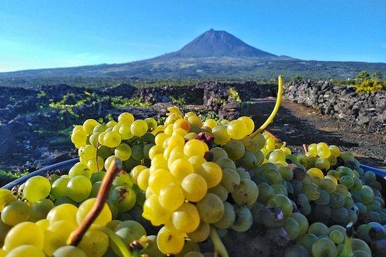 Wijngaardroute