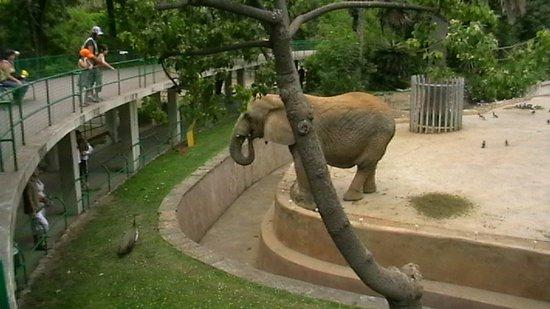 Barcelona, Španielsko: Barcellona, anno 2007,Elefanti allo zoo.