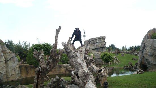 Barcelona, Španielsko: Barcellona, anno 2007,Scimpanzè allo zoo.