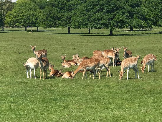 ‪Richmond Park‬