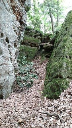 Rhododendron Cove State Nature Preserve