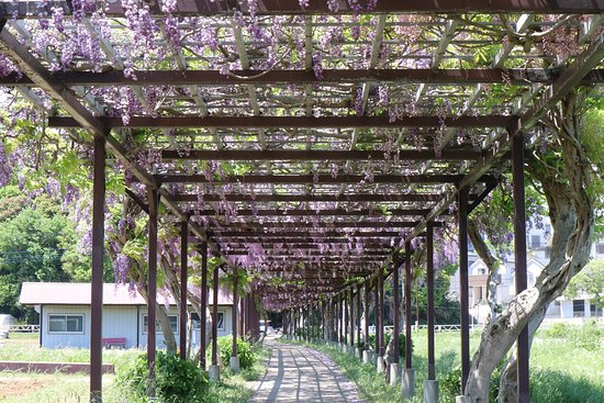 Abiko City Hydrophyte Garden