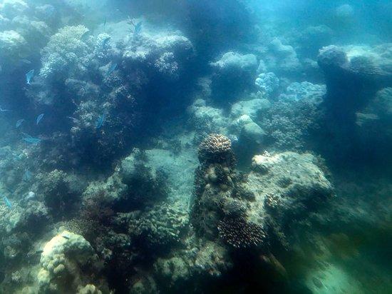 Excursión de un día a Green Island desde Cairns: Photo taken from the submarine at Green Island.