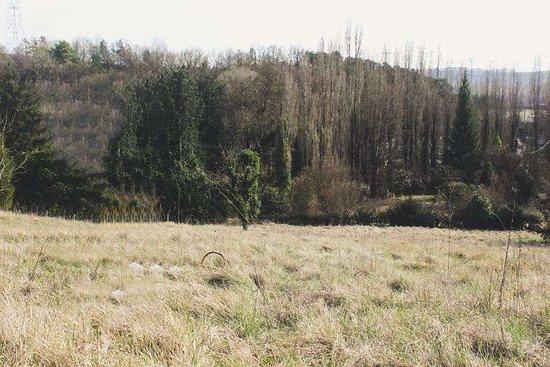 Vernou-la-Celle-sur-Seine