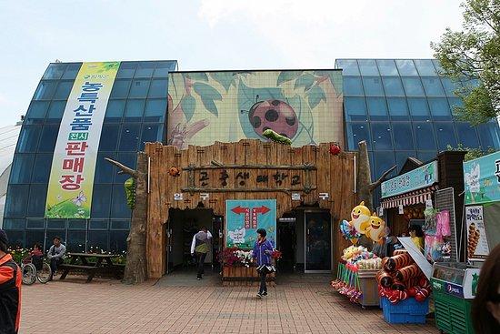 함평 나비축제 행사장 내부 전경