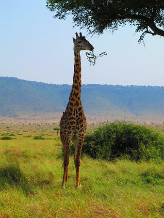 Budget Africa Safari (Nairobi) - 2019 All You Need to Know BEFORE