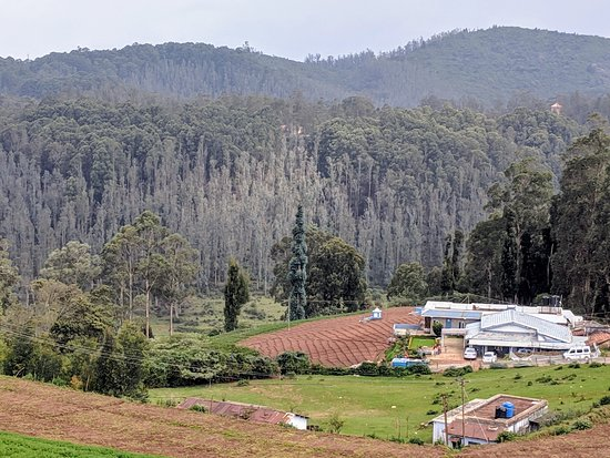 Landscape Picture Of Sterling Ooty Fern Hill Ooty