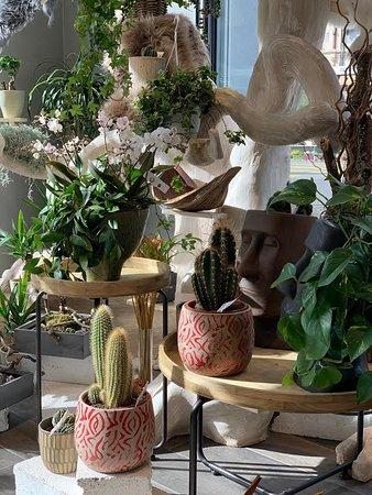 Lancy, Sveits: Cactus et plante